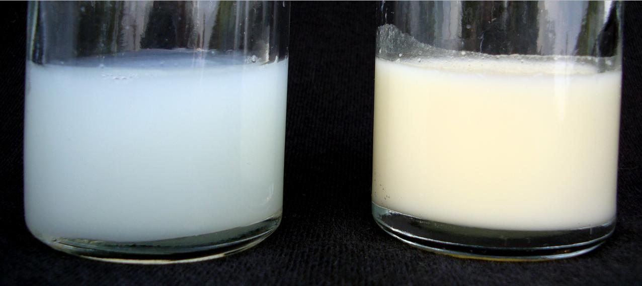 Как проверить грудное молоко на жирность в домашних условиях пошагово